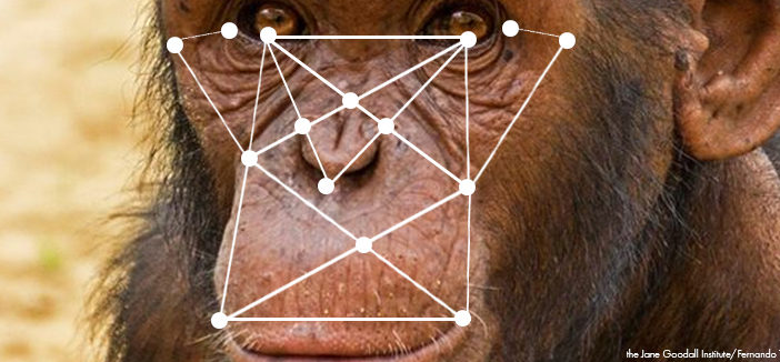 chimpface banner