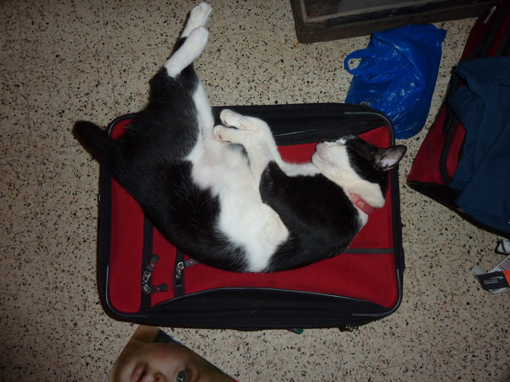 Bugs (Dar es Salaam) ALWAYS lies on my red suitcase