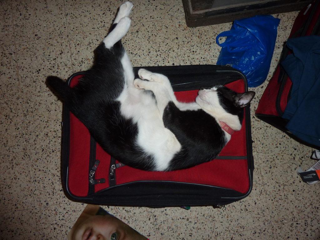 Bugs (Dar es Salaam) ALWAYS lies on my red suitcase