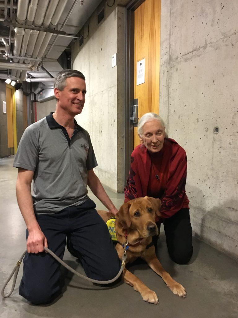 Cello, Service dog