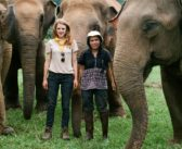 Elephant Documentary Proves All You Need is 'Love and Bananas'