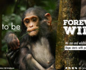 You Give Us Hope That We Can Keep Species ForeverWild !