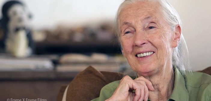Protected: March 24, 2020: Special Message from Dr. Jane Goodall to JGI Family