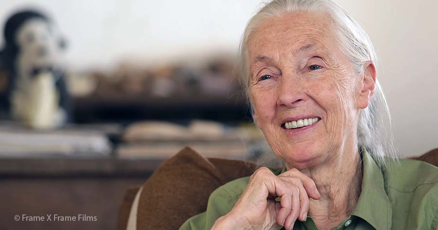 Dr. Jane Goodall, in Gombe