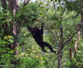 Bringing JGI's InnovativeChimpanzee ConservationModels and Tools to Liberia