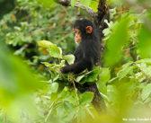 JGI Receives Prestigious Award for Biodiversity Conservation