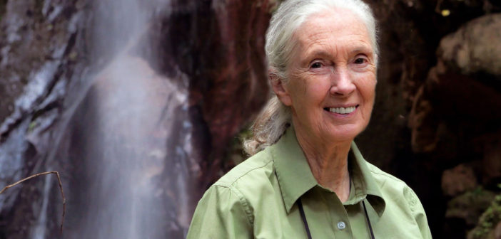 Dr. Jane Goodall's Holiday Message 2019