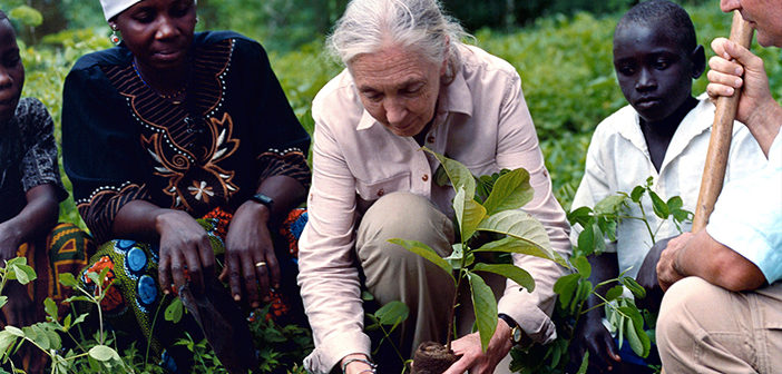 Dr. Jane Goodall Commits to 5 Million Trees in 2020 As Part of UNEP Campaign