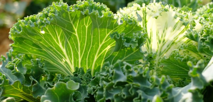 Grow Your Own Veggie Garden From Home