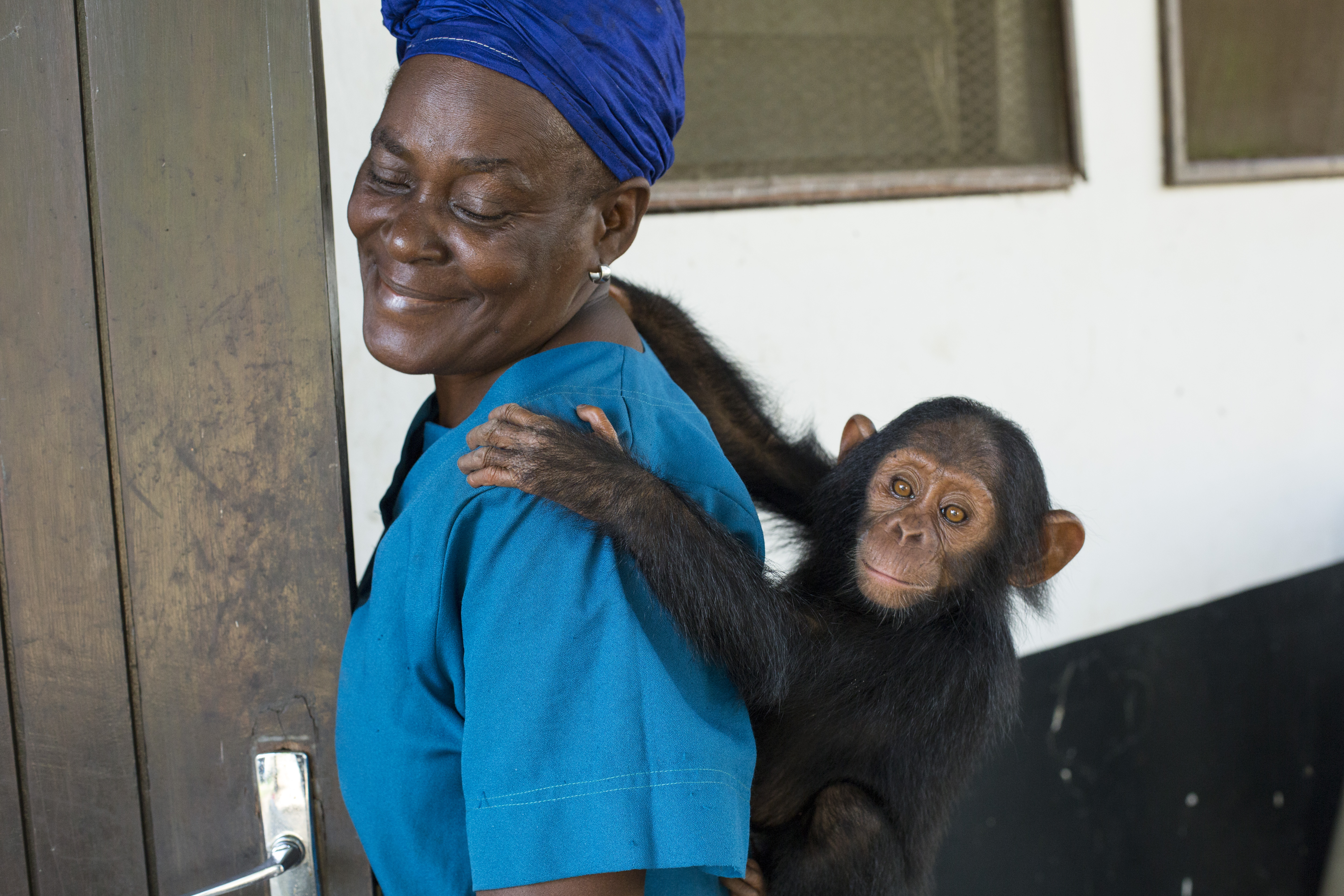 A Mother for Rescued Orphan Chimpanzees: Antonette