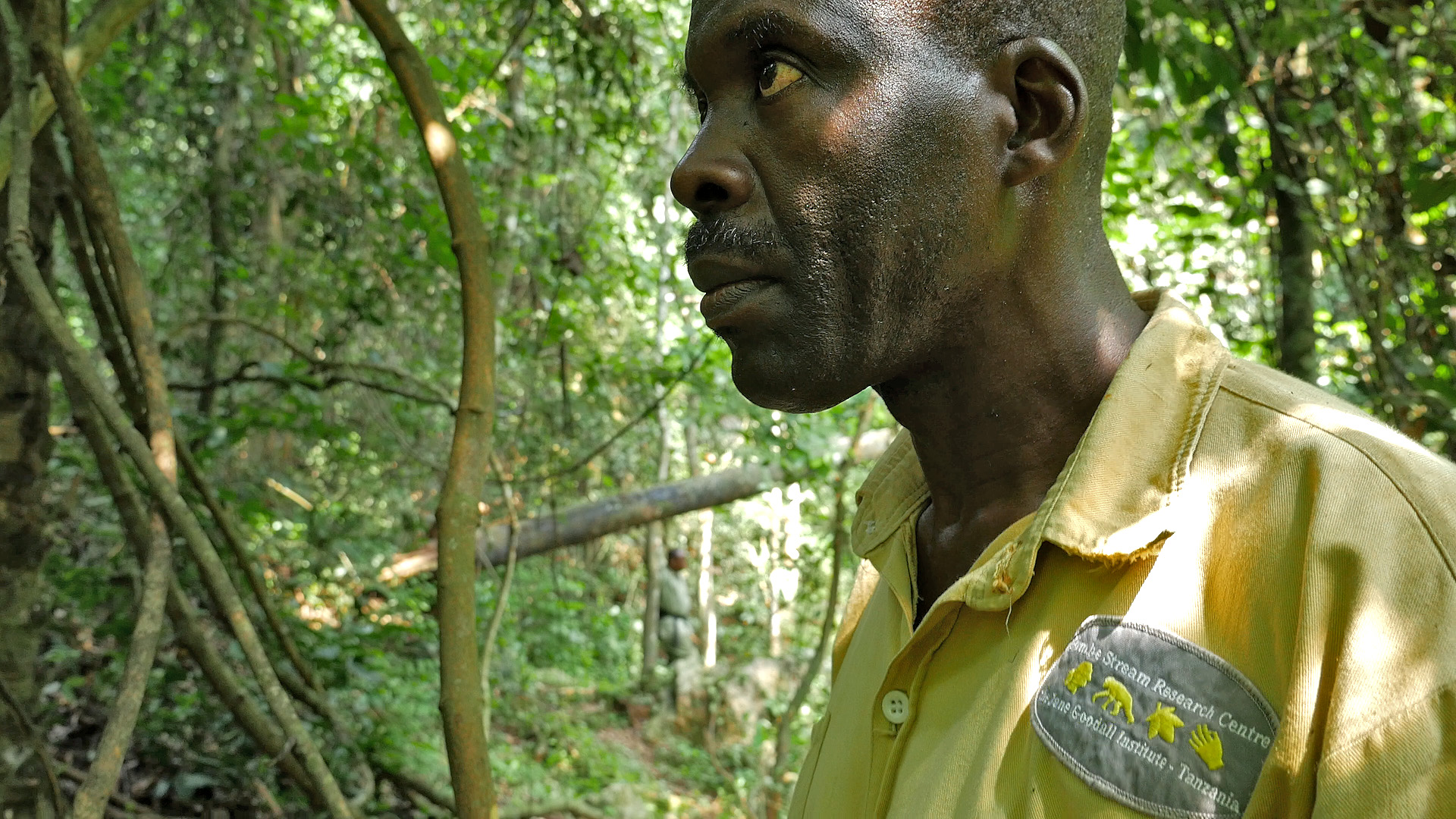 Head Above the Rest: Gabo, Leader of Gombe's Chimpanzee Research Team