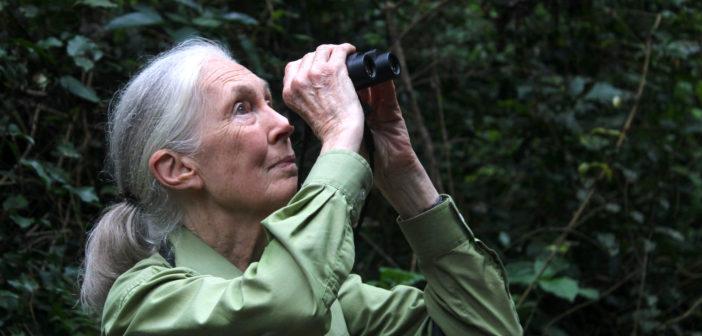 JGI Partners with MediaValet to Preserve & Share Jane's Legacy