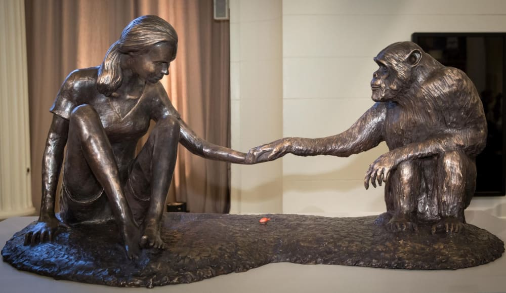 Marla Friedman's Sculpture of Dr. Goodall and David Greybeard – Now Available in Limited Edition